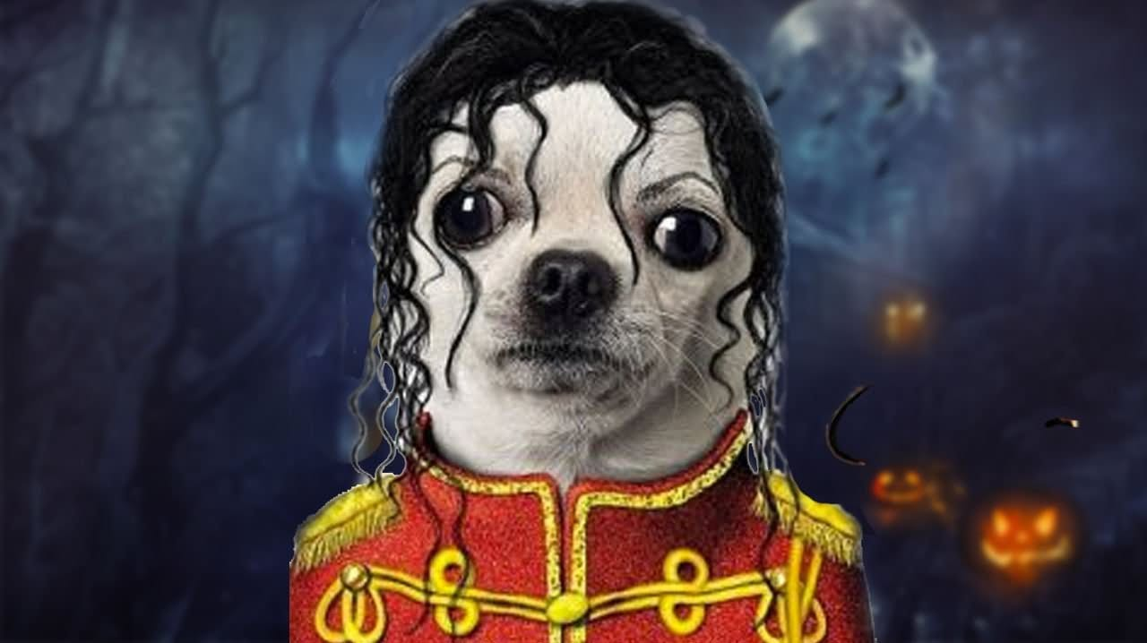 Pup dressed to look like Michael Jackson